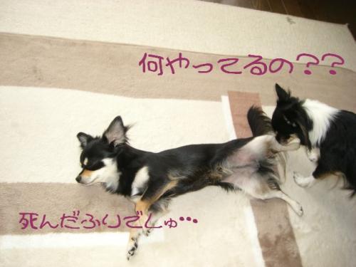 うなぎ犬6
