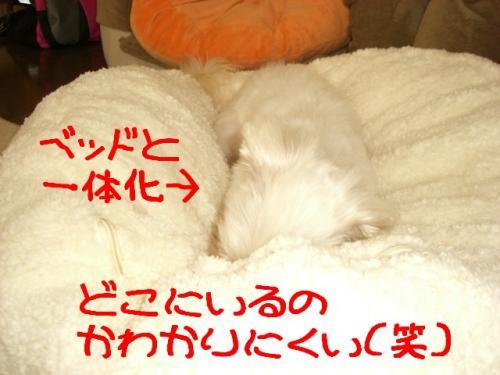 ベッド11