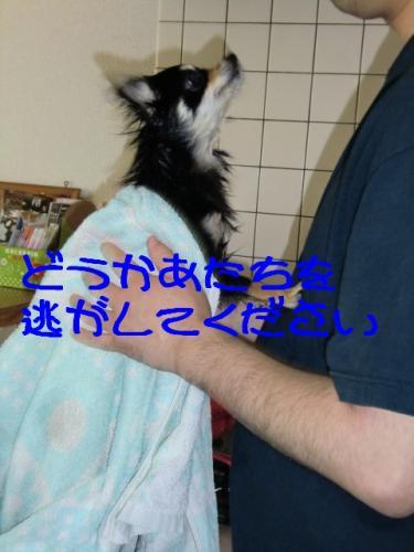 シャワー9