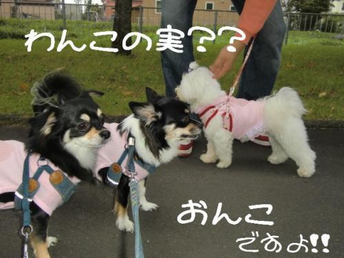 朝散歩13