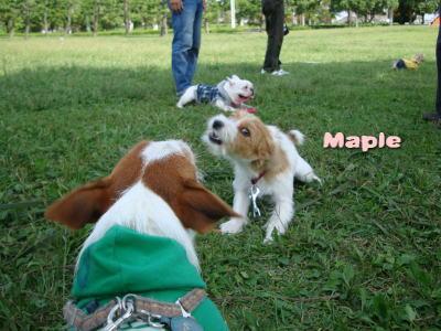 Mapleちゃん