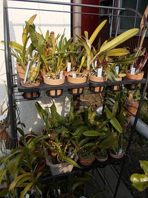 Orchids 20131201