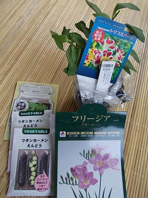 Plants 20131213-2