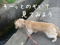 DSC02992.jpg