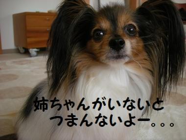 010_20100506205801.jpg