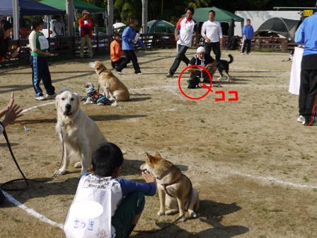 10_20101020152816.jpg
