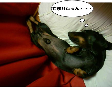 10_20101109014605.jpg