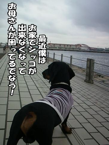 11_20100730132119.jpg