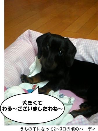 12_20100514231534.jpg