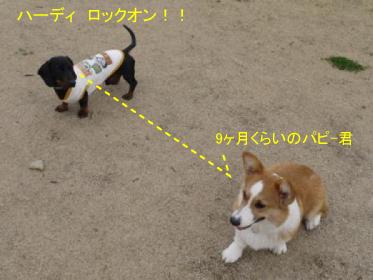 1_20100319231149.jpg