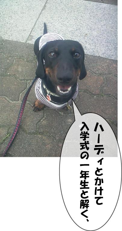 1_20100706013320.jpg