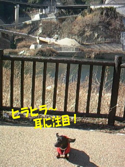 1_20110130220951.jpg