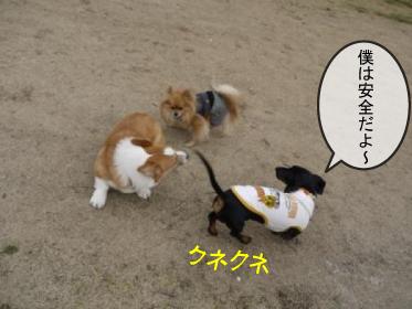 2_20100319231325.jpg