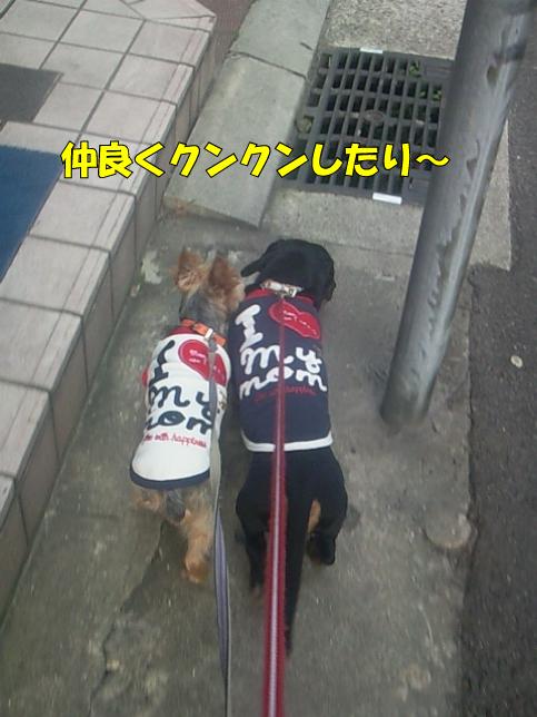 2_20100329170803.jpg