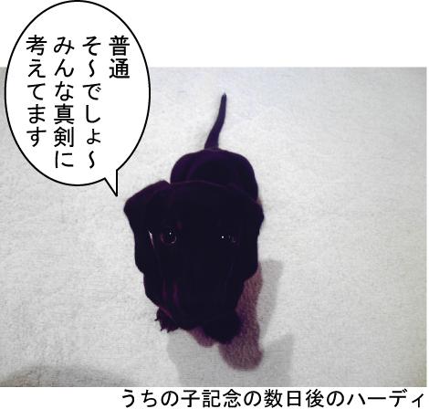 2_20100513142640.jpg