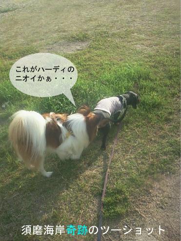 2_20100610164440.jpg
