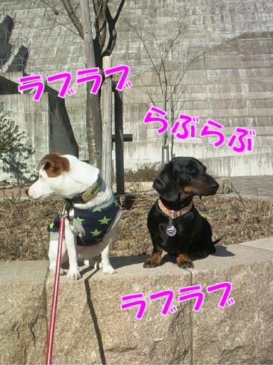 2_20101121010410.jpg