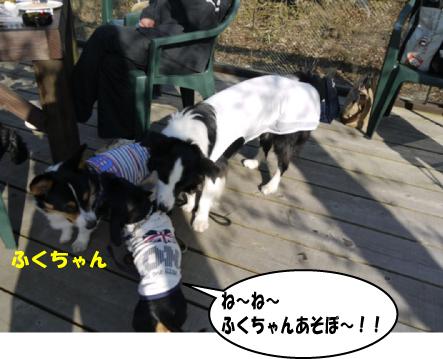 3_20100429111044.jpg