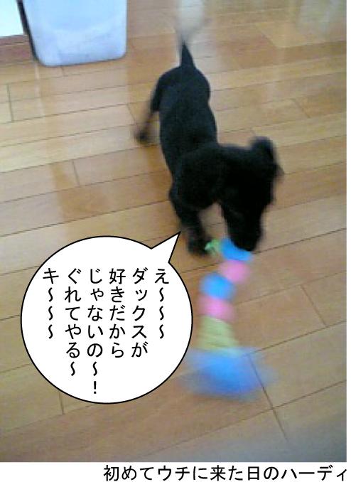 3_20100513151704.jpg