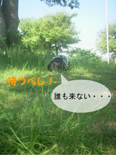 3_20100603032950.jpg