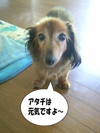 3_20100723012158.jpg