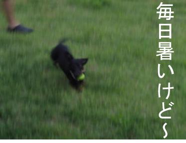 3_20100817011825.jpg