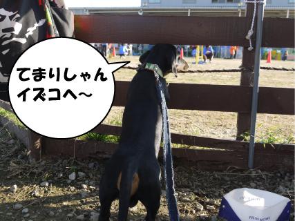 3_20101109000609.jpg