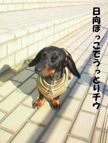 3_20110128220515.jpg