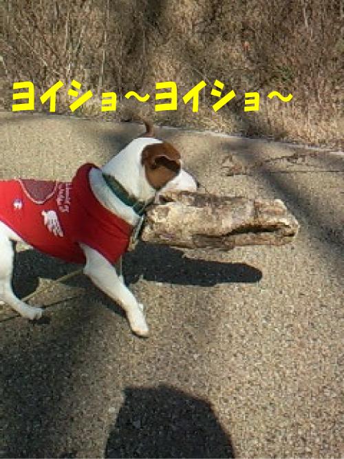 3_20110130220950.jpg