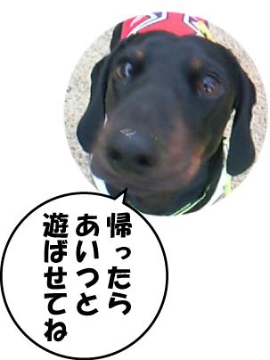 3_20110131210836.jpg