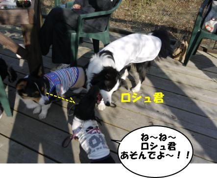 4_20100429111253.jpg