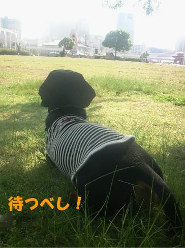 4_20100603033059.jpg