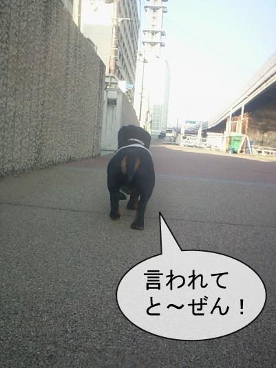 4_20100607003817.jpg