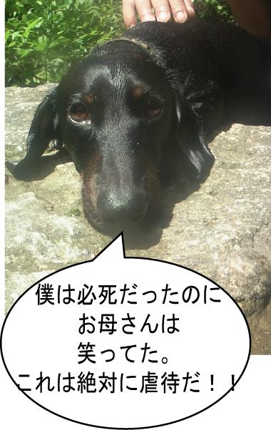 4_20100720012032.jpg
