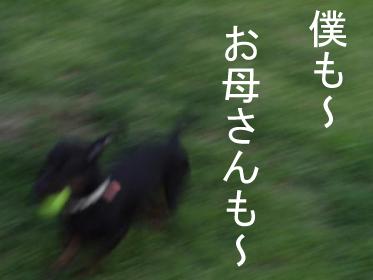 4_20100817011824.jpg