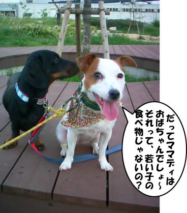 4_20101013234329.jpg