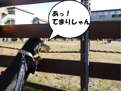 4_20101109000608.jpg