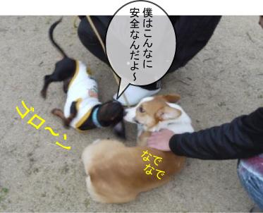 5_20100319231715.jpg
