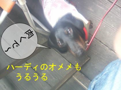 5_20100325001342.jpg