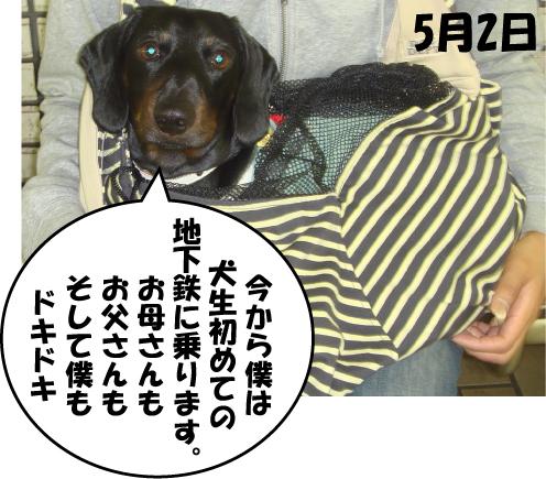 5_20100505011814.jpg