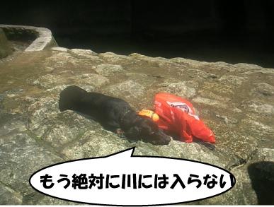 5_20100720012140.jpg