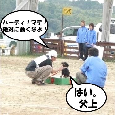 5_20101020141111.jpg