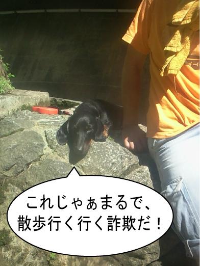 6_20100720012339.jpg