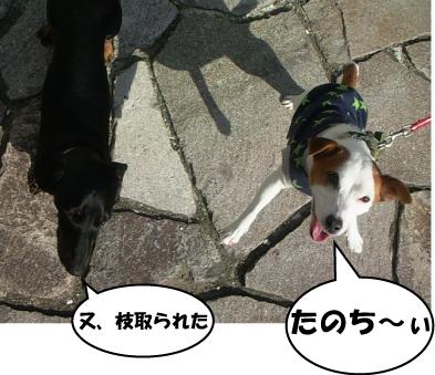 6_20101122004531.jpg