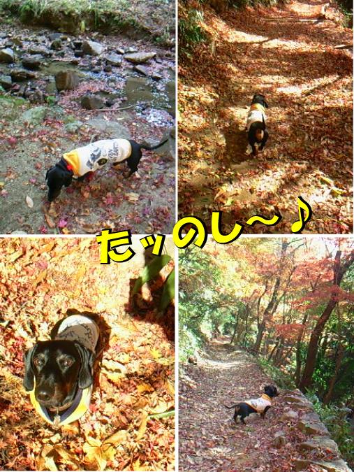 6_20101205194428.jpg