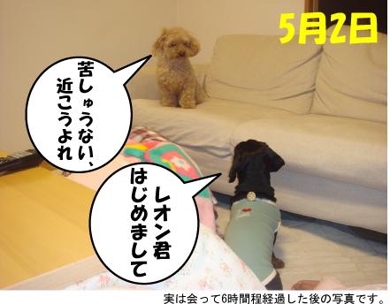 7_20100505012211.jpg