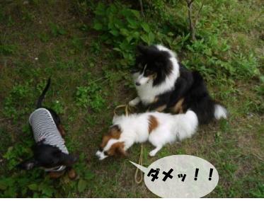 7_20100703003600.jpg