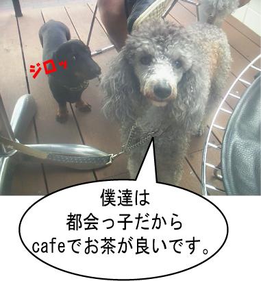 7_20100720013128.jpg