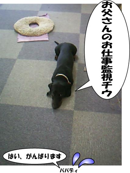 7_20100826152505.jpg