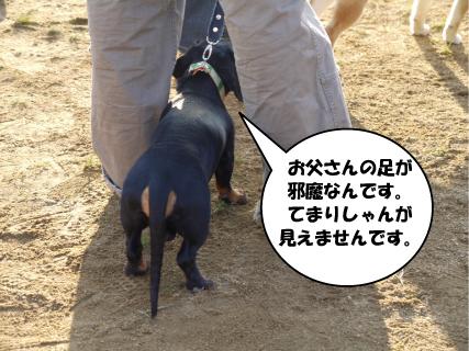7_20101109005426.jpg
